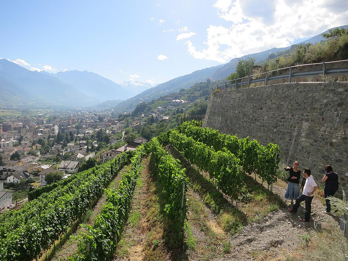 黒ブドウはピノ・ネロ、ガメイ、プティ・ルージュ、フミン、シラー。白ブドウはプ ティ・アルヴィーヌ、モスカート、ミュラー・トゥルガウなどの栽培が主流です。