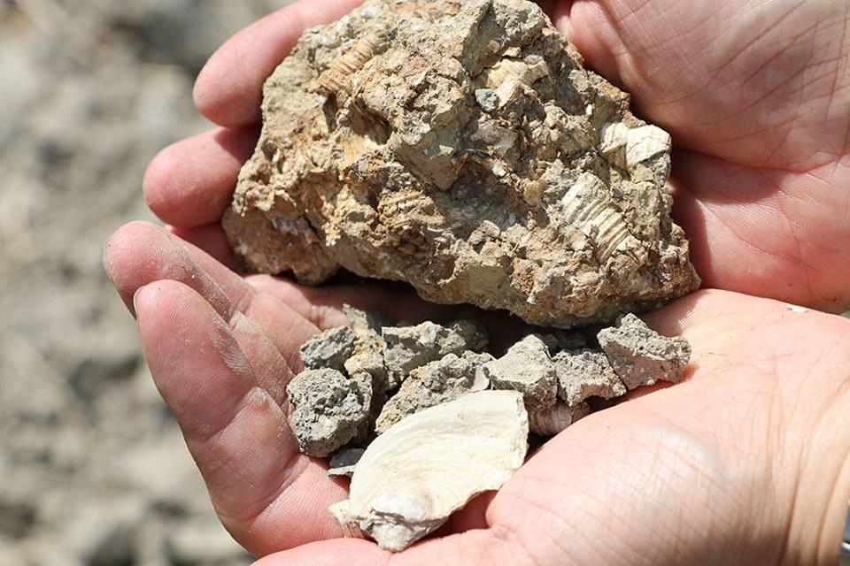 畑の地中から出てきた貝殻