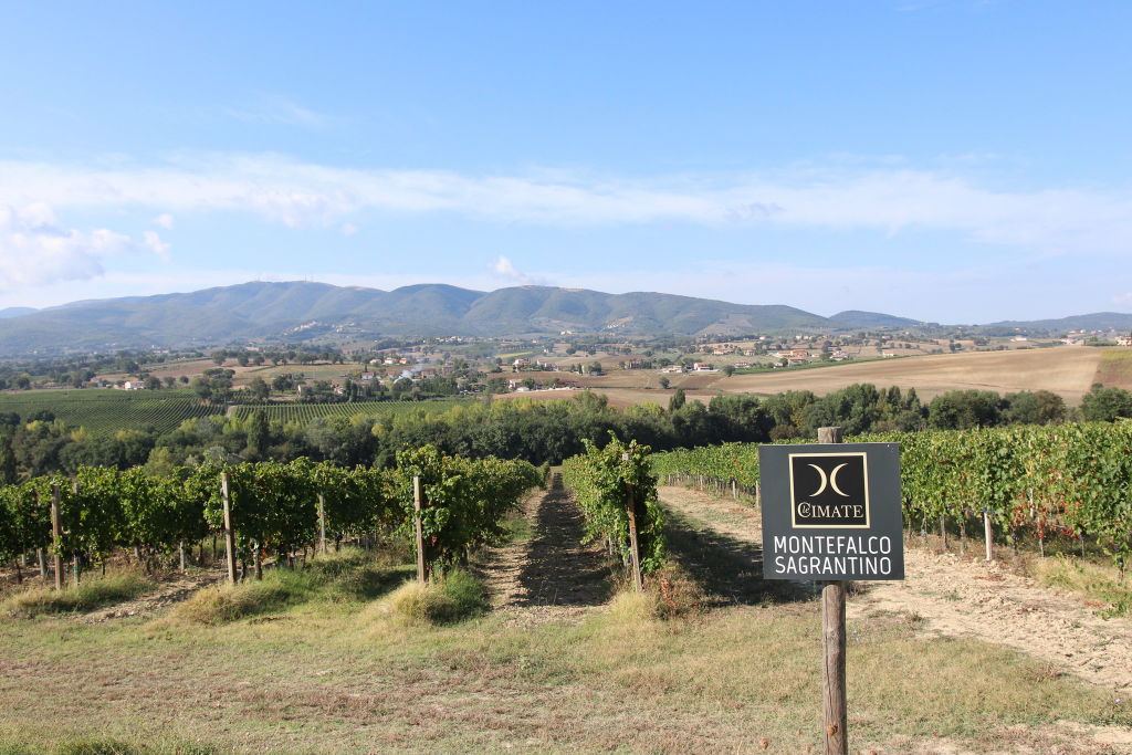モンテファルコ・サグランティーノのブドウ畑。